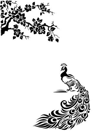 Páv s ocasem rozpuštěného na bílém pozadí. Černá a bílá ilustrační.