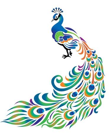pluma de pavo real: Pavo real con la cola disuelto en el fondo blanco. Vectores