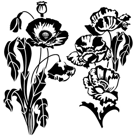 vlčí máky, květy a listy. Ilustrace