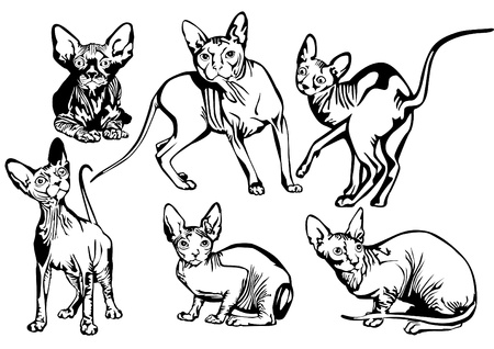 Collection of exotic cats of breed a sphinx.