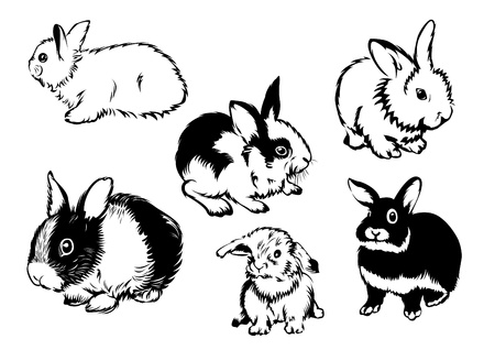Drawings of rabbits in various poses Illustration