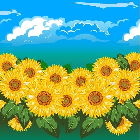 A beautiful field  of sunflowers under cloud.