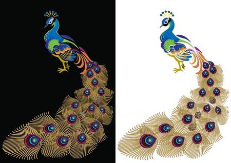 pluma de pavo real: Pavo real con la cola disuelto en el blanco y negro. Vectores