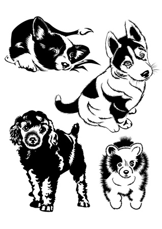 poodle: Collection of dogs. The Black-and-white illustration.