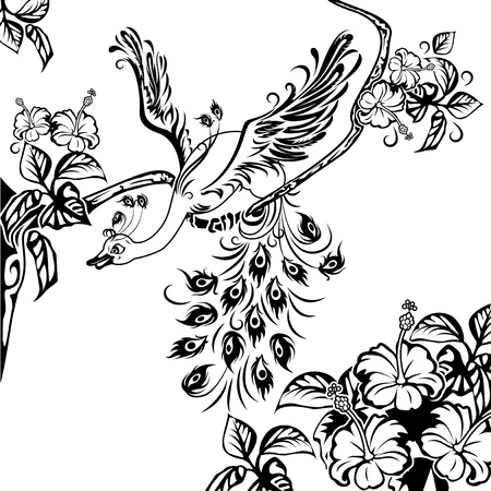 Peacock na větvi stromu plné květy ibišku. Černá a bílá ilustrační. Ilustrace