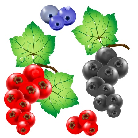 red currants: Sprigs of red and black currants  Berries  Stock Photo