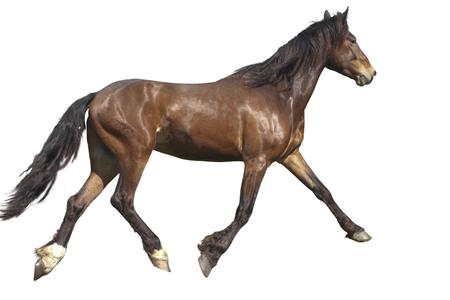 Pasture, summer day  bay horse runs