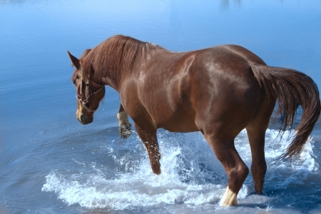 chestnut mare bathed and hoof beats