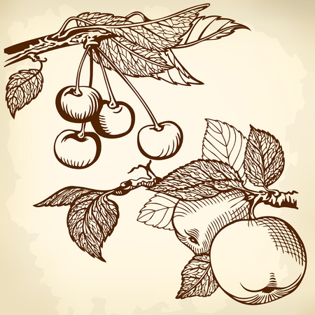 Apple and cherry, drawing monochrome. Vector