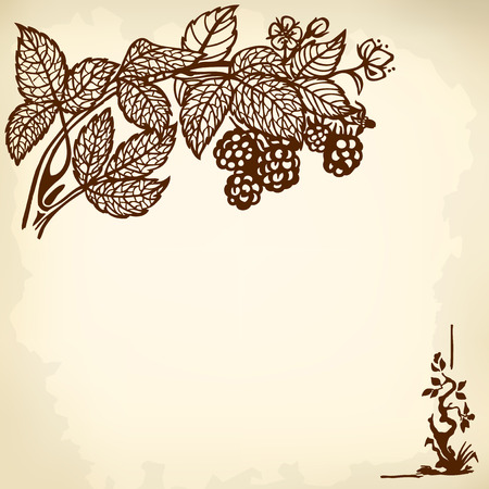Blackberry branch with berries and flowers. Drawing. Vintage. Vector