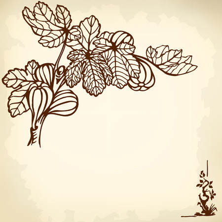 fig leaf: A branch of a fig with berries and leaves. Drawing. Vintage.