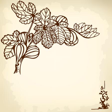 feuille de figuier: Une branche d'un figuier avec des baies et des feuilles. Dessin. Vintage. Illustration