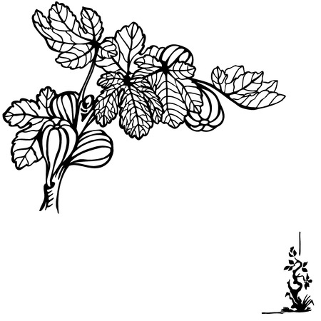 sub tropical: A branch of a fig with berries and leaves. Drawing. Vintage.