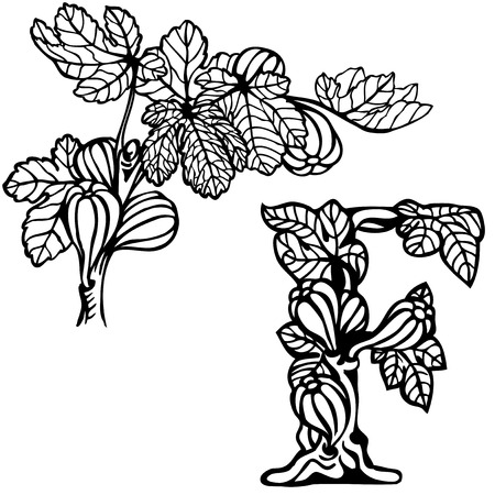fig leaf: Letter of the alphabet F. Figs on a branch.