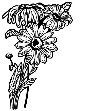buch: A buch of a daisy with flowers and leaves. Drawing. Vintage. Illustration