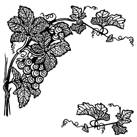 A branch of a grapes with berries and leaves. Drawing. Vintage. Vector