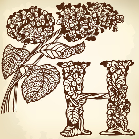 Letter of the alphabet H. A branch of a hydrangea with floewrs and leaves. Vector