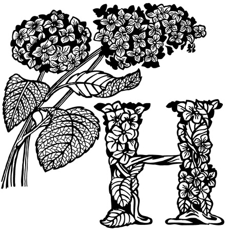 letter head: Letter of the alphabet H. A branch of a hydrangea with floewrs and leaves.