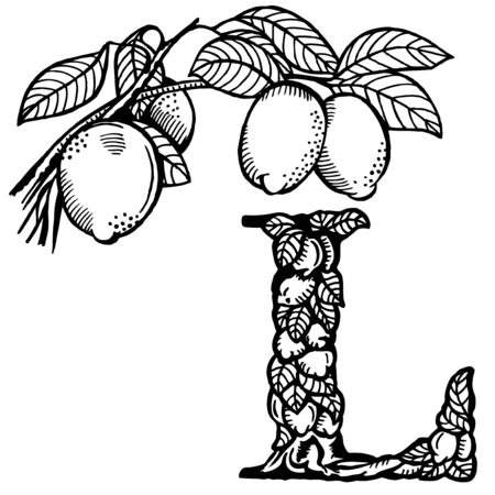 fruitage: Letter of the alphabet L. A branch of a lemon with fruit and leaves. Illustration