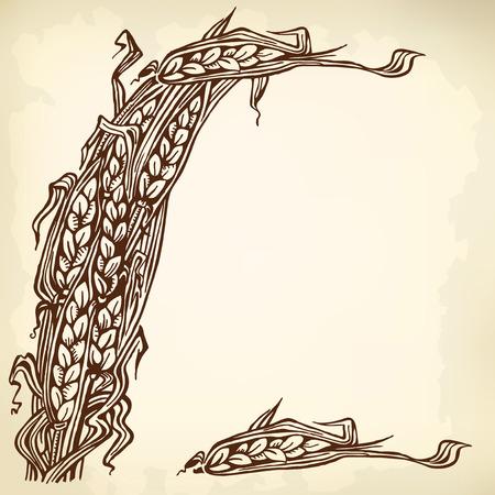 sheaf: Gavilla y espiguillas individuales de trigo. Dibujo del vintage.