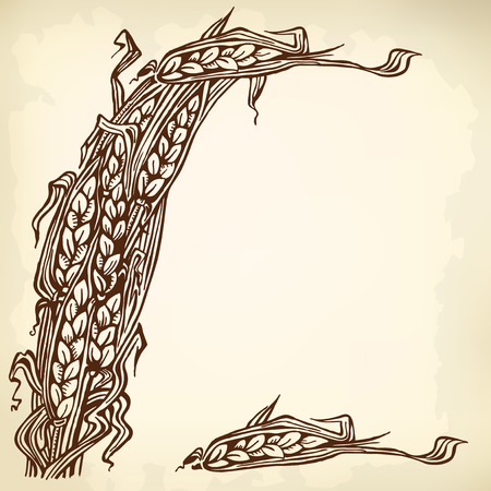 Sheaf and individual spikelets of wheat. Vintage drawing. Vector
