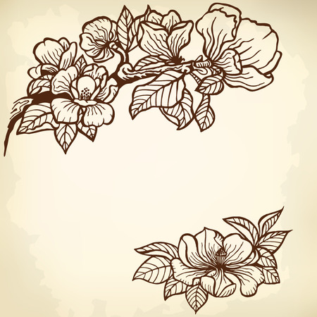 Twig of magnolia flowers and leaves. Vintage drawing.