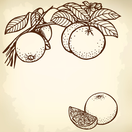 citrus tree: Thread orange, flowers, fruit and leaves. Segment of an orange.