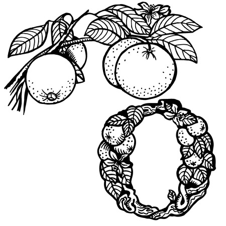 Thread orange, flowers, fruit and leaves. Litera O.