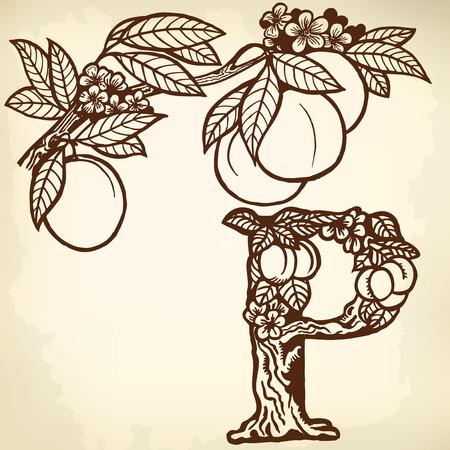 A branch of peach, flowers, fruit and leaves. Litera P. Zdjęcie Seryjne - 33740605