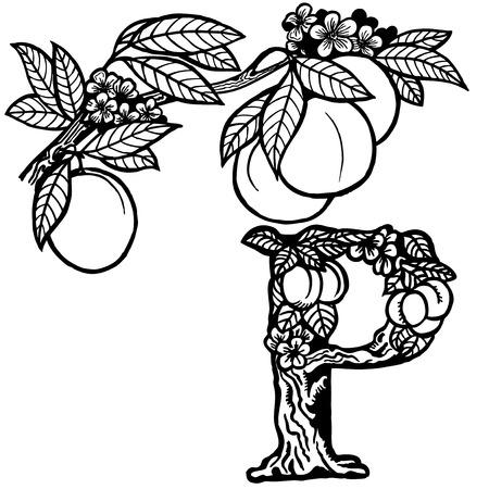 A branch of peach, flowers, fruit and leaves. Litera P. Zdjęcie Seryjne - 33740640