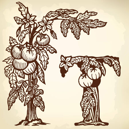 Bush tomatoes, flowers, berries and leaves. Litera T. Zdjęcie Seryjne - 33740648