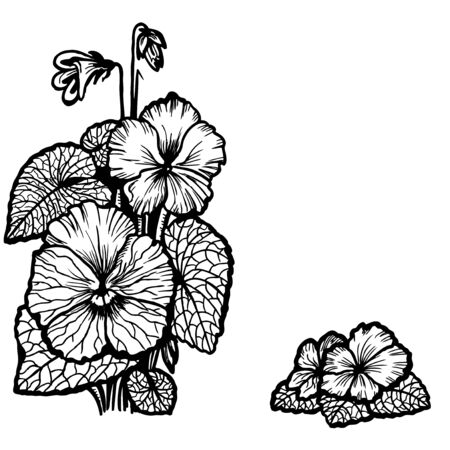 Bouquet of violets, flowers and leaves. Vintage drawing. Vector