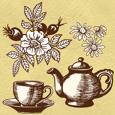 chamomile tea: Herbal tea, wild rose and chamomile. Flowers and berries. Illustration