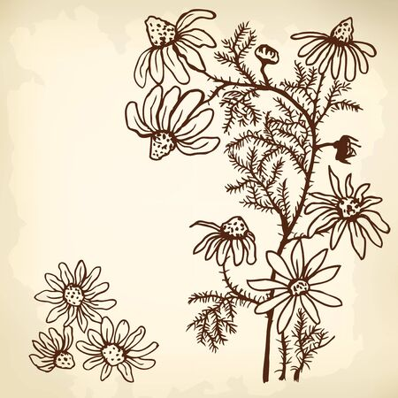 watermill: Bush chamomile flowers and leaves. Stylized drawing. Illustration