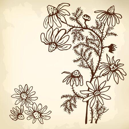 non alcohol: Bush flores de manzanilla y hojas. Gr�fico estilizado. Vectores