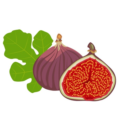 fig: Fig - flowers, whole fruit and cut pieces.