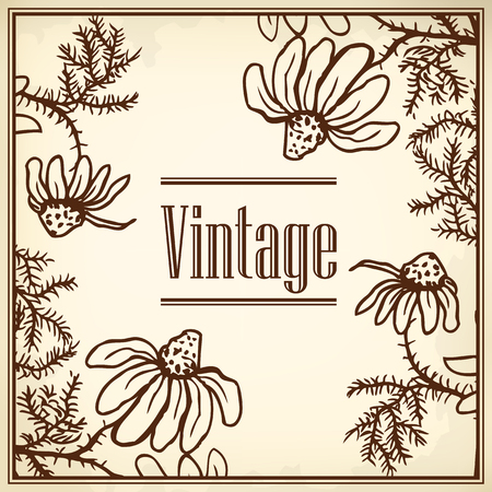 chamomile tea: Vintage template cards and invitations. Flowers of camomile.