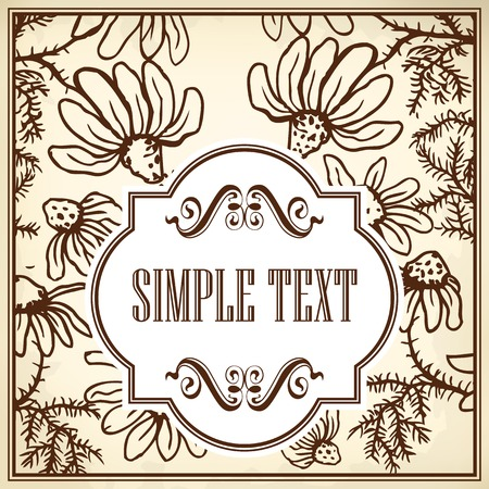 homeopathic: Vintage template cards and invitations. Flowers of camomile.