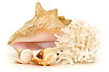 Seashell composition photo