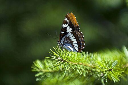 lightness: Butterfly on the tree Stock Photo
