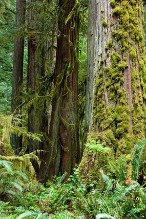 Popular trails in Olympic national park rainforest Stock Photo - 396327