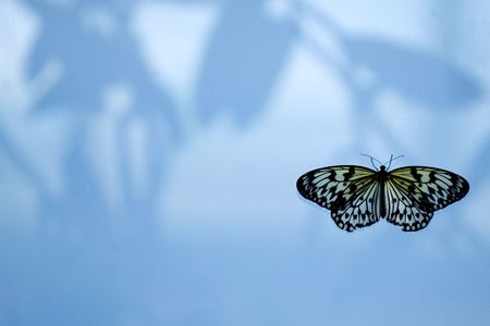 Butterfly on the windown with copy space Stock Photo - 404372