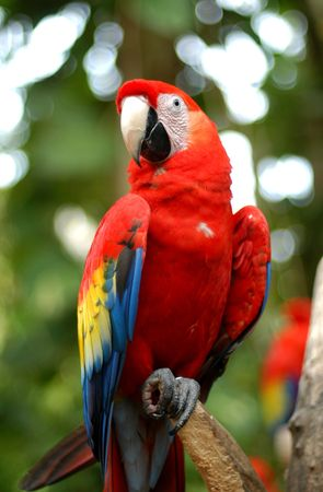 Close up of parrot in Mexico Stock Photo
