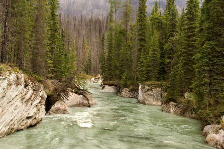 pine creek: Glacier river in Jasper national park, Canada