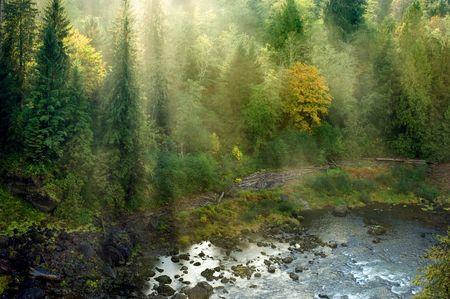 bushwalk: Evergreen forest in sun rays in Pacific Northwest, Washington