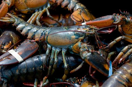 Live lobsters caught in Bar Harbor, Maine Stock Photo