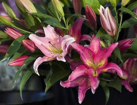 Flower arrangement at annual Philadelphia Flower Show Banco de Imagens