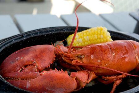 Steamed red lobster in Bar Harbor restaurant, Maine photo