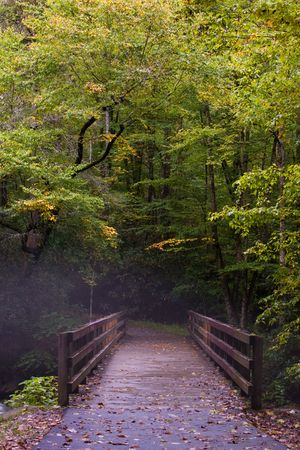 Fog in Great Smoky Mountains photo