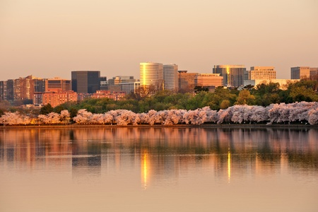 business building: Skyscrapers of Rosslyn, VA with cherry blossom in sunrise Stock Photo